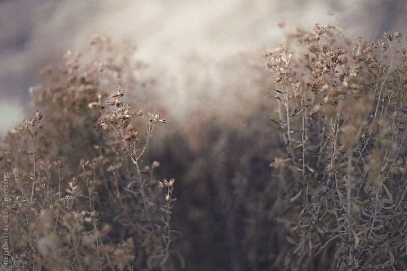 Wild desert flora and fauna in the desert by Rachel Bellinsky for Stocksy United