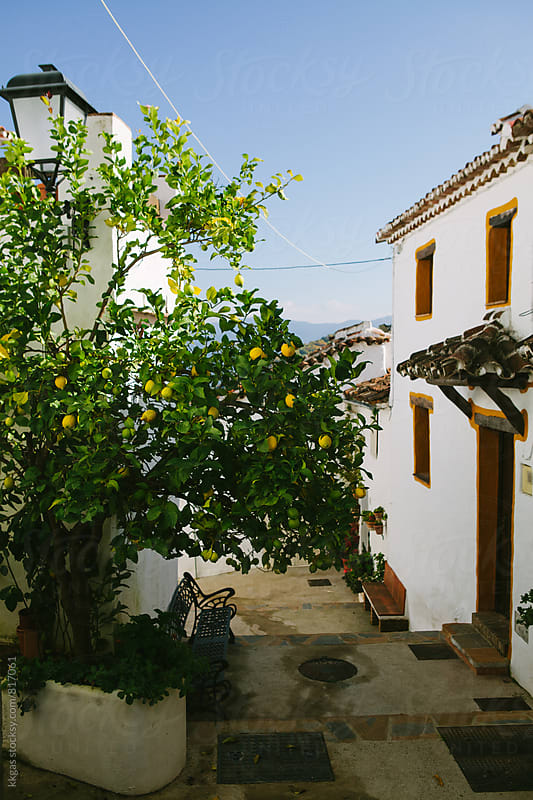 Lemon tree between traditional country houses in Spanish village by kkgas for Stocksy United