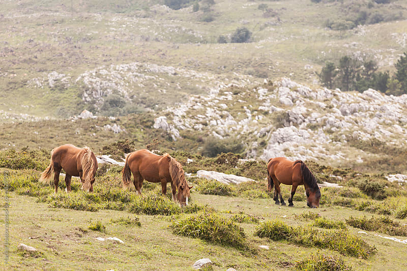 Horses grazing on a hill by Marilar Irastorza for Stocksy United