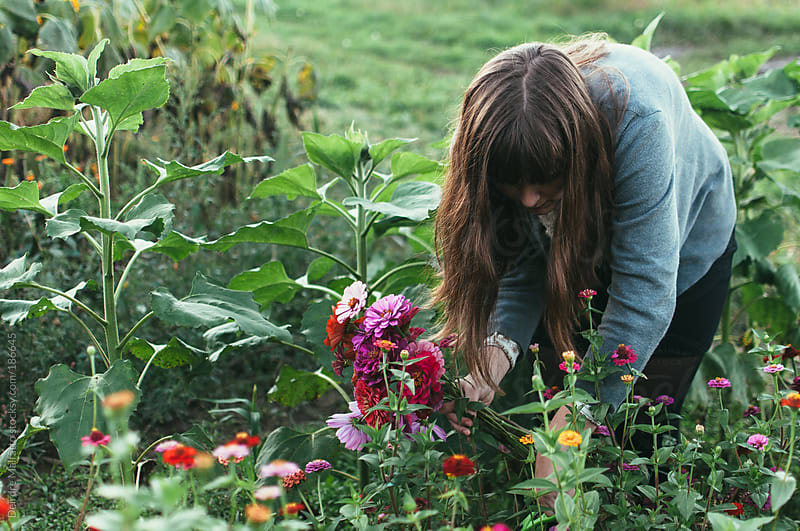 teen girl cutting and gathering flowers on a farm by Deirdre Malfatto for Stocksy United
