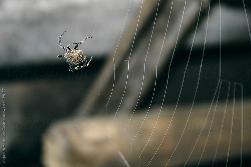 Spider on a web by Alejandro Moreno de Carlos for Stocksy United