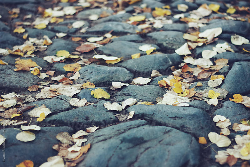 Autumn leaves on concrete by Jovana Rikalo for Stocksy United