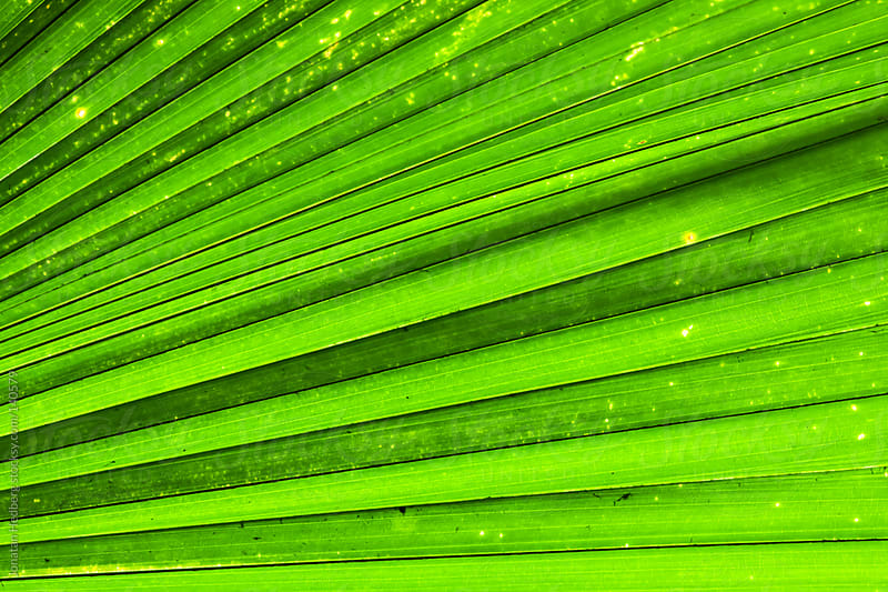 Closeup of a very big leaf by Jonatan Hedberg for Stocksy United
