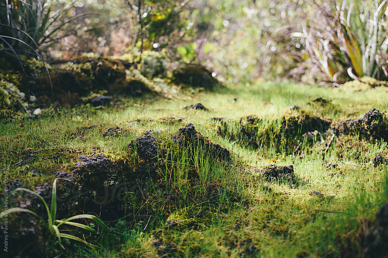 Green gras on volcanic terrain by Andrey Pavlov for Stocksy United