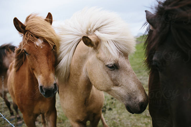 Group of horses by luke + mallory leasure for Stocksy United