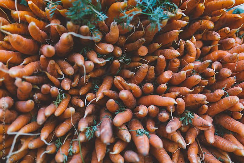 Carrots at a farmers market by Douglas Robichaud for Stocksy United