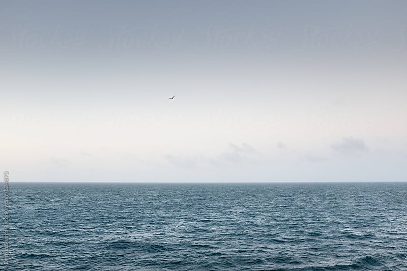 A lone bird soaring over a calm ocean on a clear day by Darren Seamark for Stocksy United