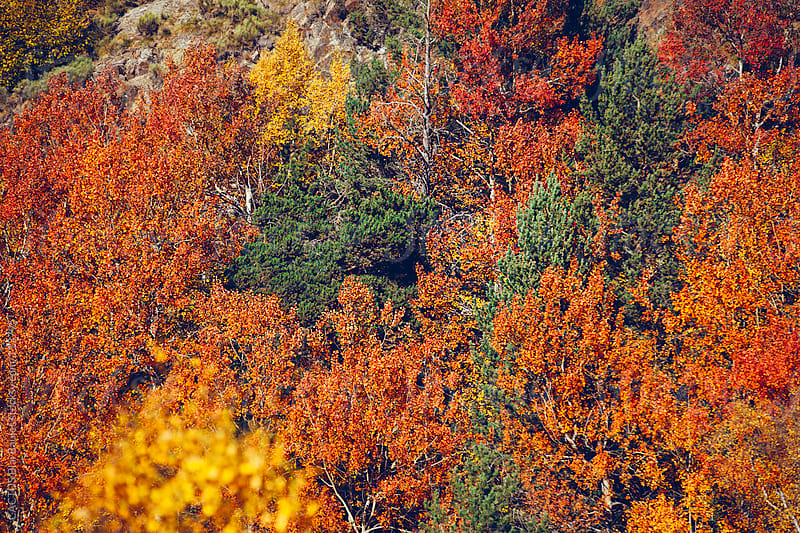 Pyrenees fall forest. by CACTUS Blai Baules for Stocksy United