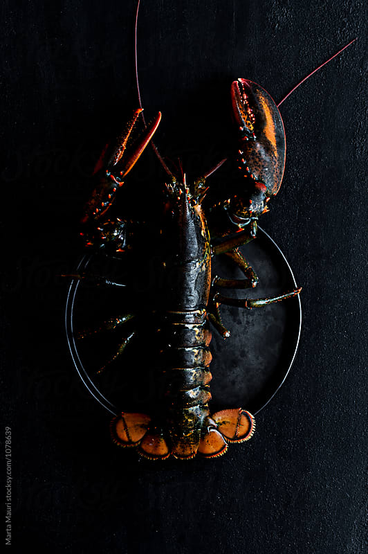 Lobster  by KEMA Food Culture for Stocksy United