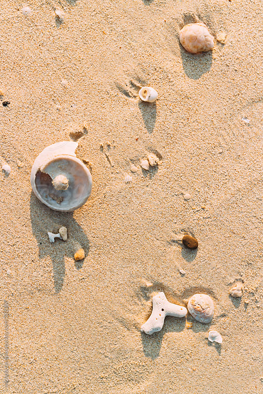 Broken shells on the sand by michela ravasio for Stocksy United
