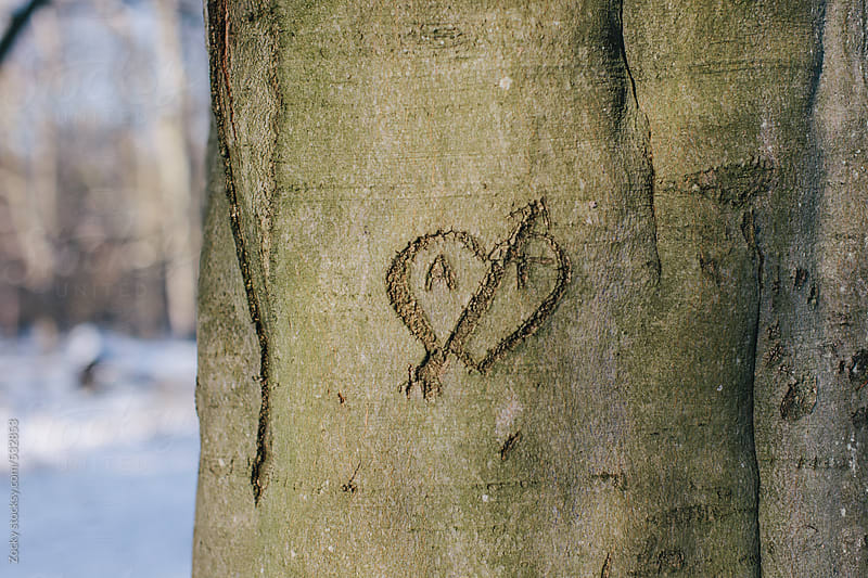 Lovers' initials carved on a tree bark by Zocky for Stocksy United