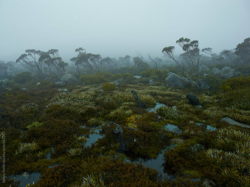 Tasmania Fog by Kenny Smith for Stocksy United