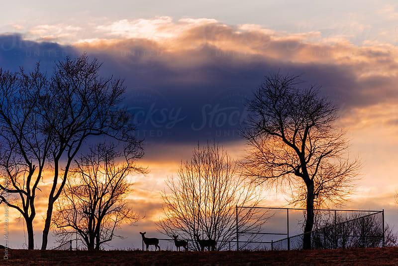 sunset deer silhouette by Deirdre Malfatto for Stocksy United