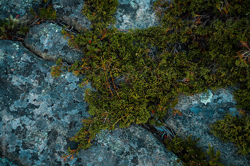 Plants growing through rocks by L&S Studios for Stocksy United