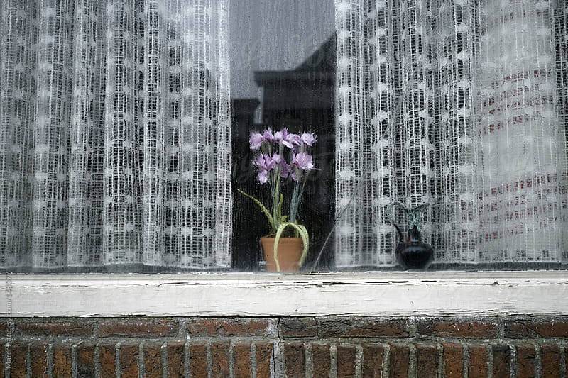 Fake plant behind window of an old house by Marcel for Stocksy United