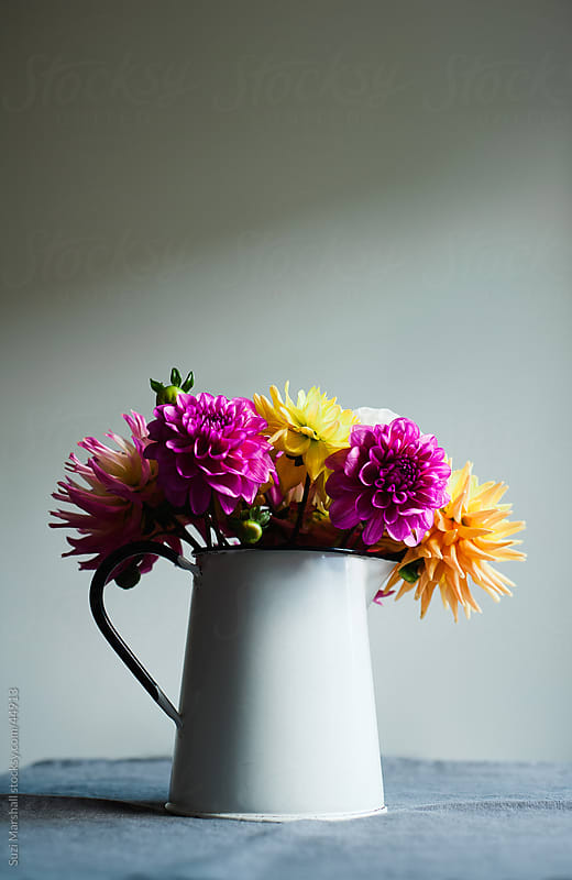 Brightly coloured Dahlias in an enamelware vase on a tablecloth by Suzi Marshall for Stocksy United