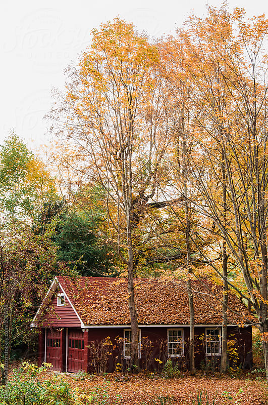 red garage covered in falling leaves in autumn by Deirdre Malfatto for Stocksy United