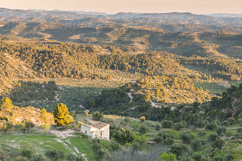 Olive tree valley at sunset by Marilar Irastorza for Stocksy United