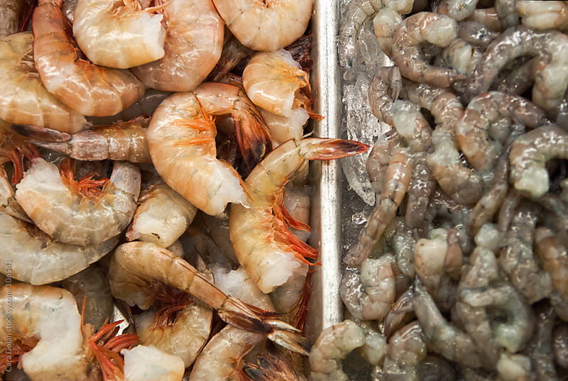 Two types of shrimp on display in an refrigerated case in a seafood market by Cara Dolan for Stocksy United