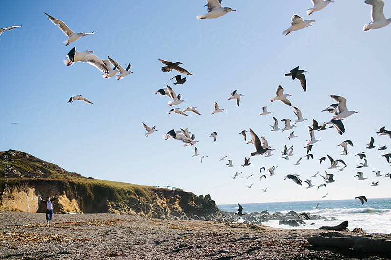 Bird Chasing by luke + mallory leasure for Stocksy United