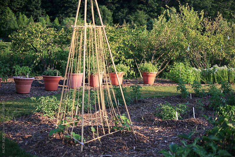 In The Garden by ALICIA BOCK for Stocksy United