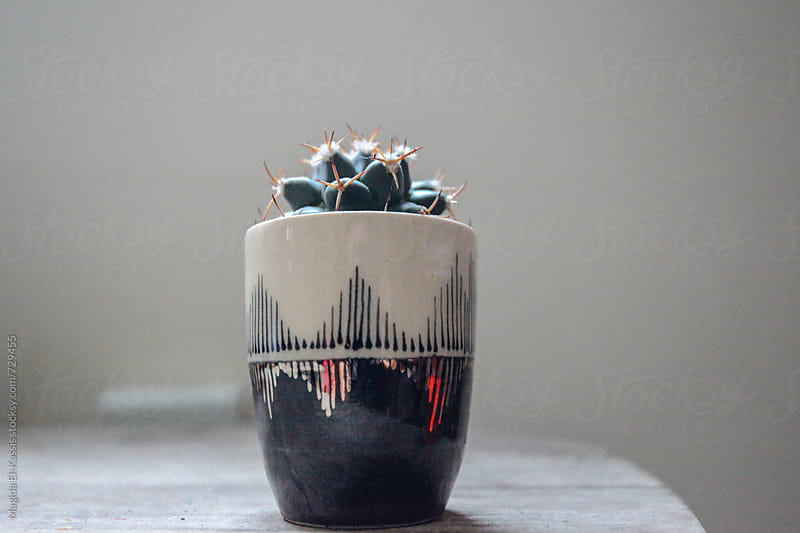 cactus by Magida El-Kassis for Stocksy United