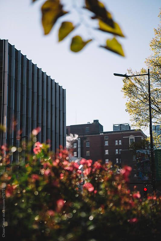 Morning in Downtown Chattanooga by Chase Castor for Stocksy United