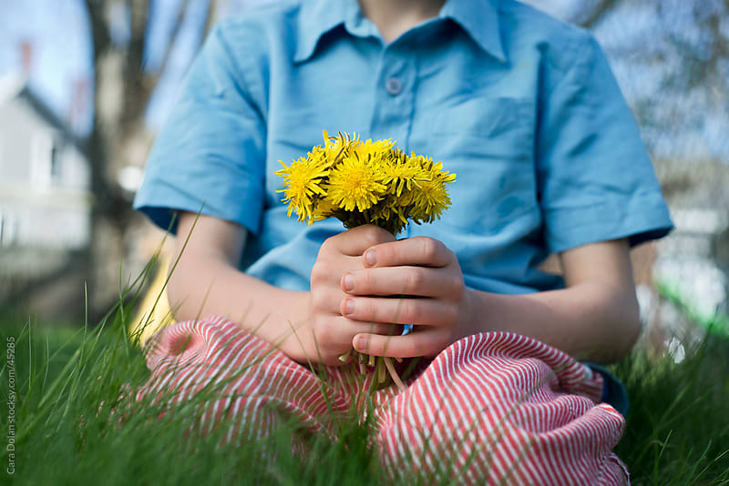 Child in grass holds on to a bouquet of dandelion flowers by Cara Dolan for Stocksy United
