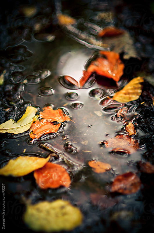 Autumn leaves.  by Darren Muir for Stocksy United