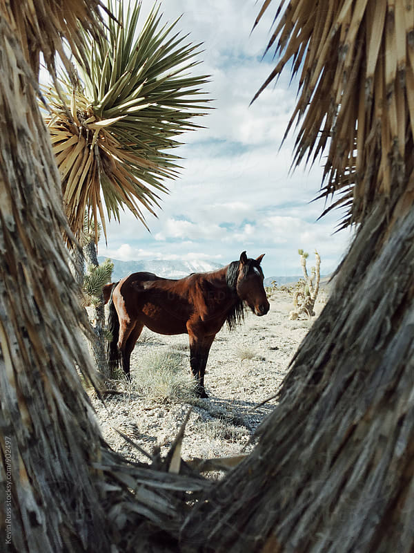 Wild Horse Through Desert Plants by Kevin Russ for Stocksy United