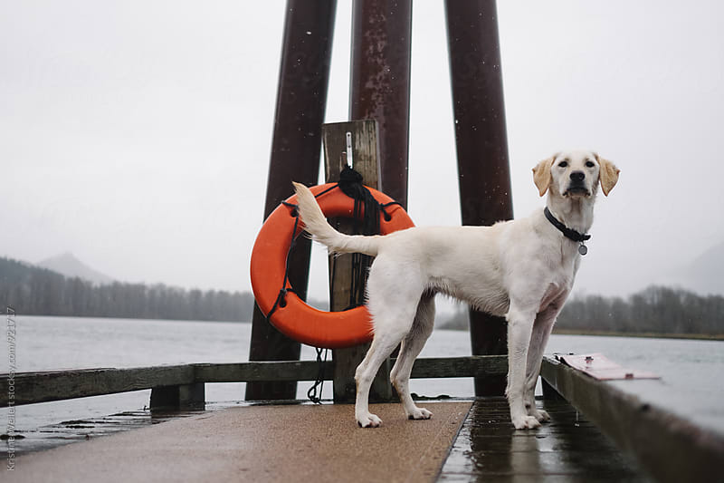 Dog Sitting on Dock by Kristine Weilert for Stocksy United
