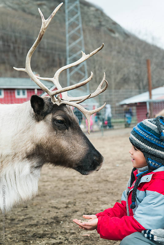 a connection between a boy and a reindeer by Tara Romasanta for Stocksy United