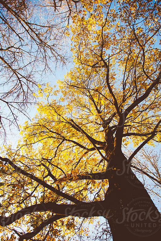 Autumn detail of a tree by Aleksandar Novoselski for Stocksy United