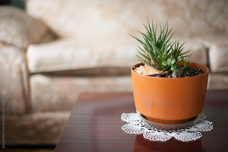 Succulent in an Orange Pot on a Vintage Doily by Briana Morrison for Stocksy United
