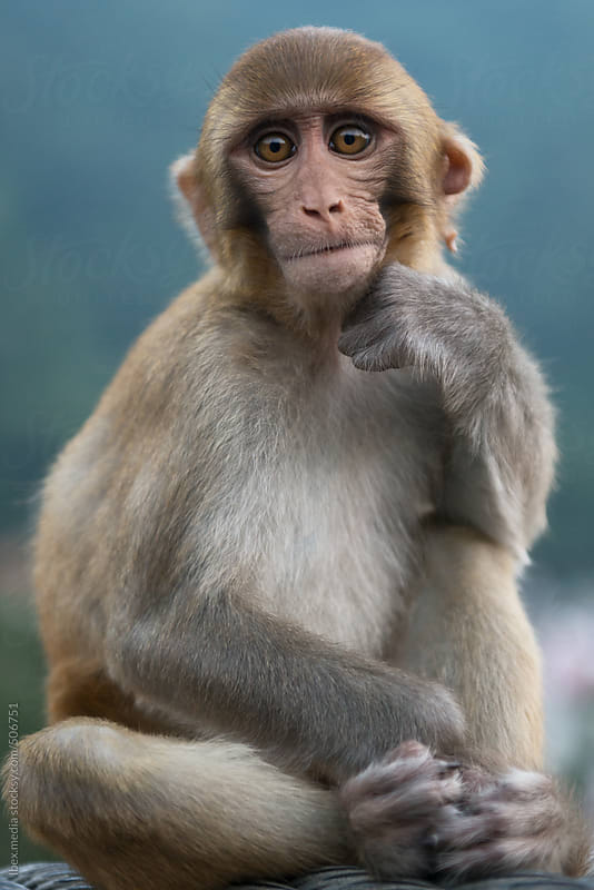 monkey face  by RG&B Images for Stocksy United