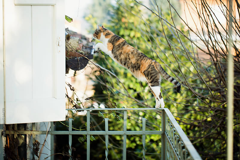 Cat jumping from balcony balustrade to building roof by Laura Stolfi for Stocksy United