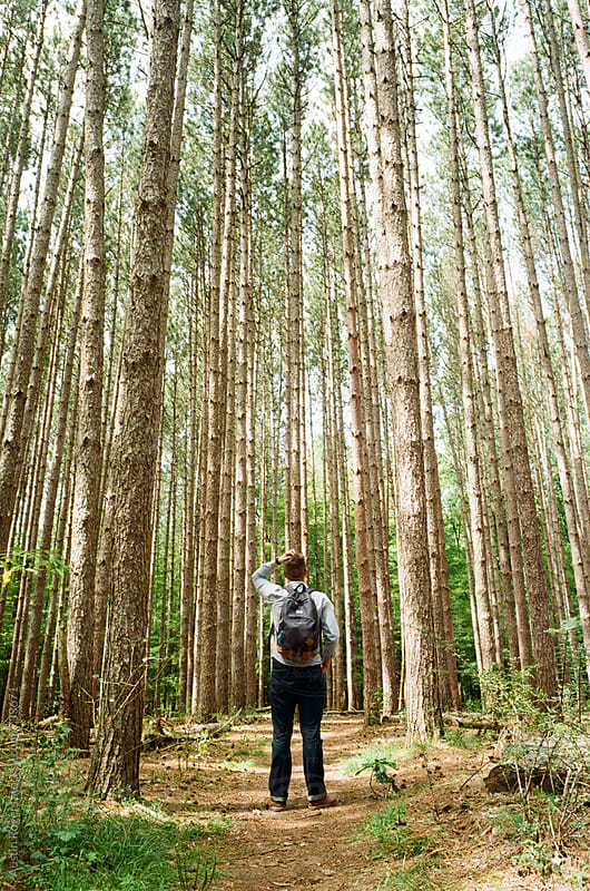 Portrait of a Young Man Standing in Dense Pine Forest by Austin Rogers for Stocksy United