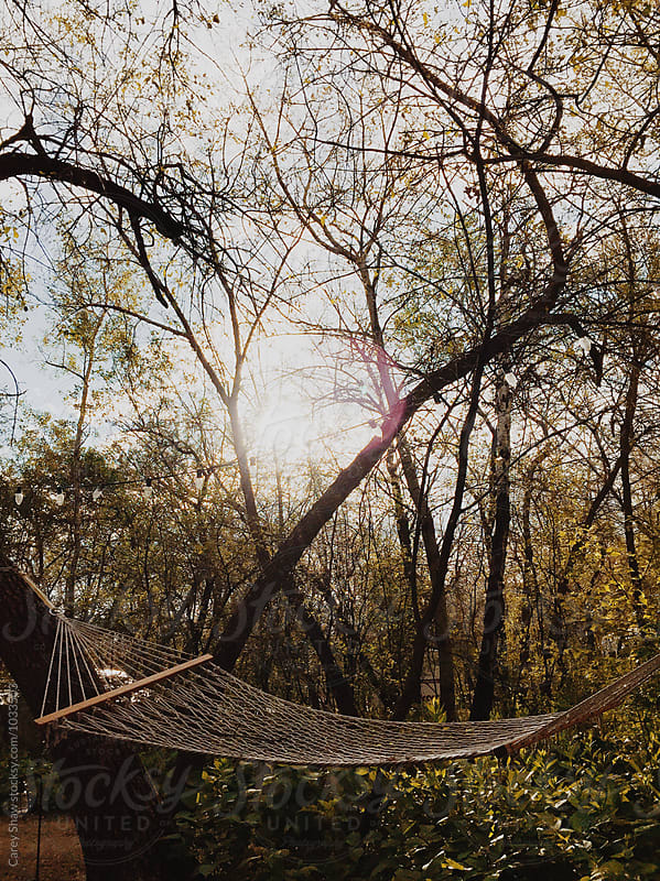 Hammock hanging in trees by Carey Shaw for Stocksy United