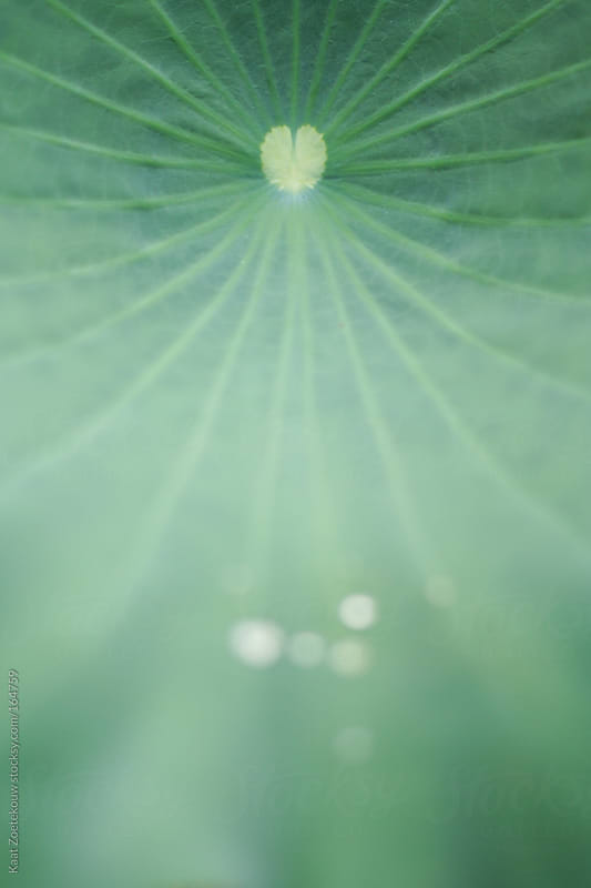 Close-up of a soft green leaf with a heart-shaped core by Kaat Zoetekouw for Stocksy United
