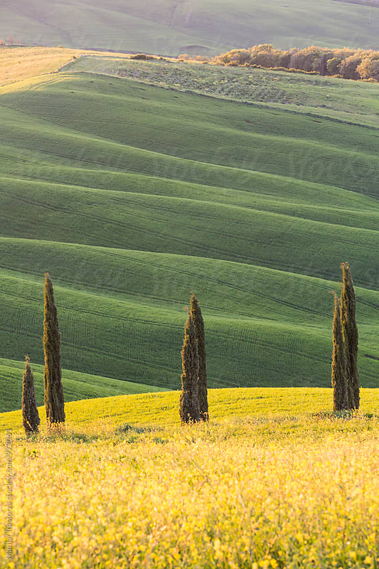 Tuscany landscape at sunset by Marilar Irastorza for Stocksy United