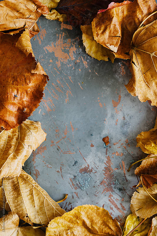 Autumn leaf background.  by Darren Muir for Stocksy United