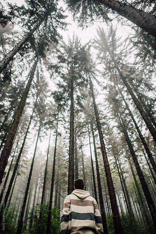 Back portrait of man standing in front of the big pine trees  by Boris Jovanovic for Stocksy United