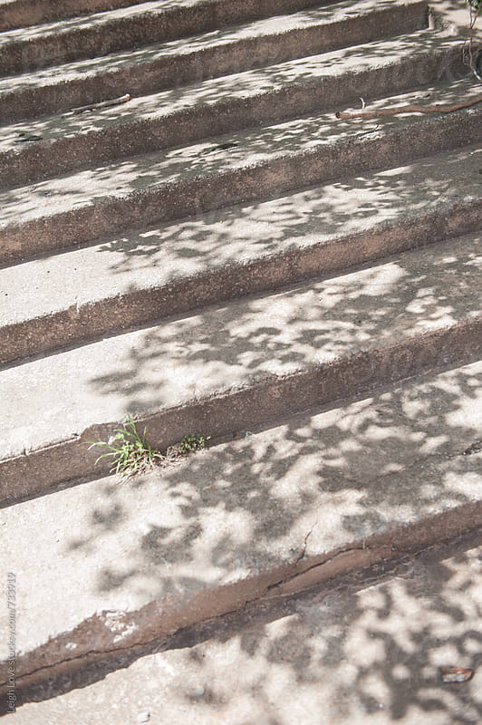 Tree Shadows on Shallow Steps by Leigh Love for Stocksy United