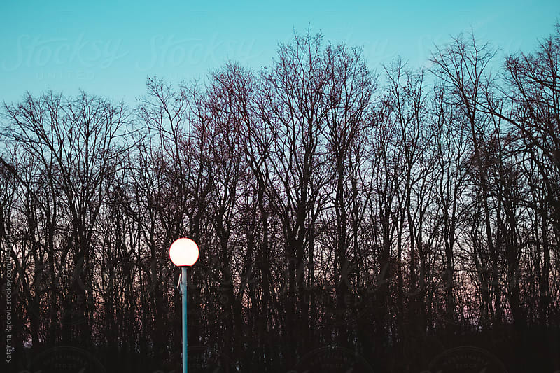 Shining Lamp in a Woods by Katarina Radovic for Stocksy United
