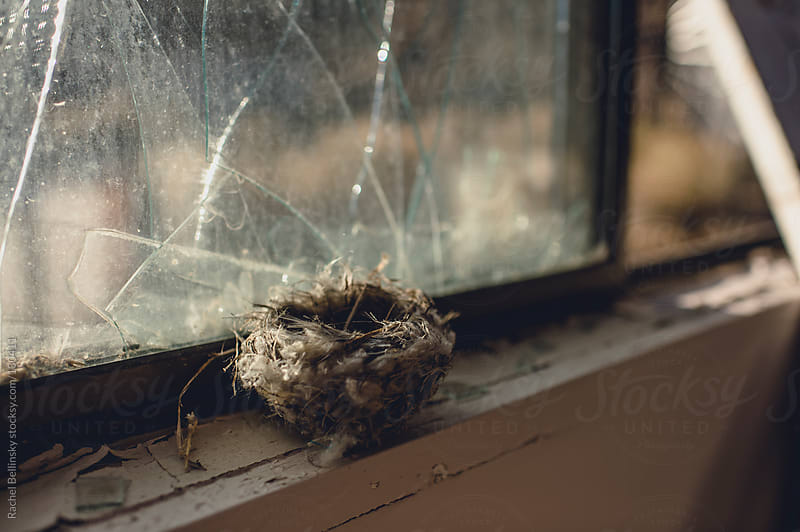 A birds nest on the broken window sill of an abandoned building by Rachel Bellinsky for Stocksy United