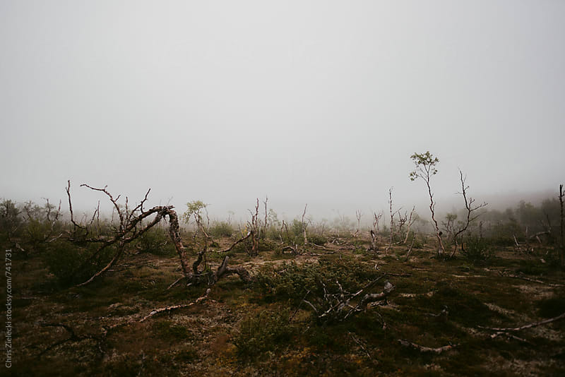 sparse trees in a foggy moor by Christian Zielecki for Stocksy United