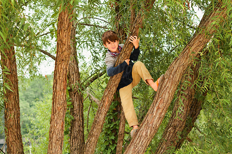 happy boy climbing up tree by Jess Lewis for Stocksy United