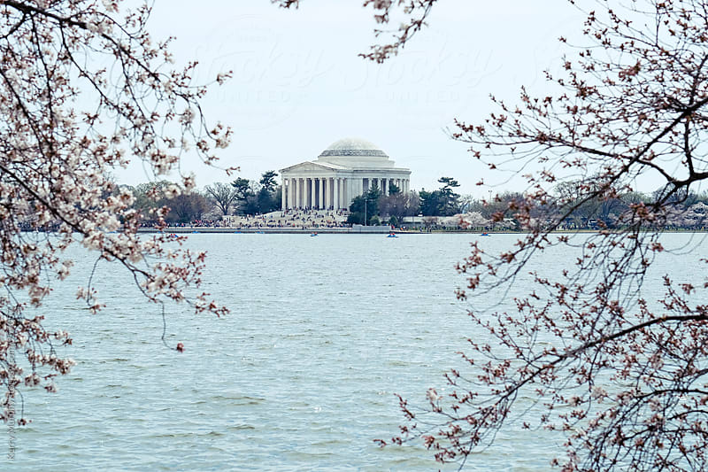 View of Jefferson Memorial through cherry tree by Kerry Murphy for Stocksy United