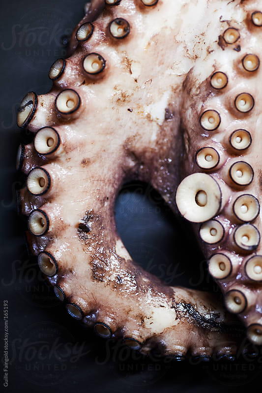 Close-up of octopus tentacles by Guille Faingold for Stocksy United