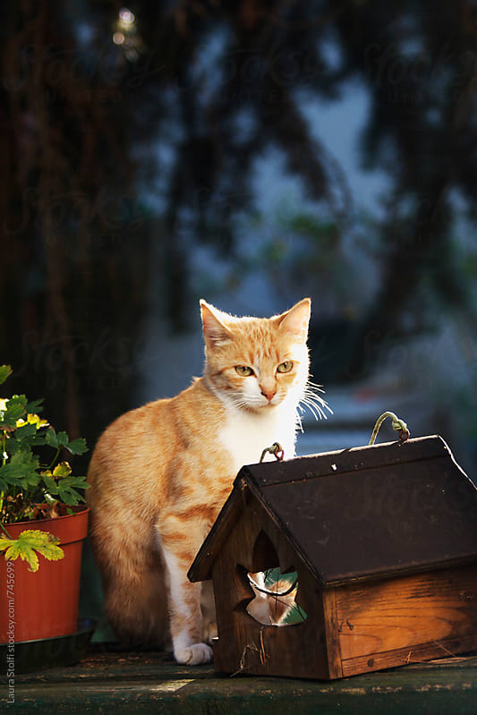Lovely ginger cat sits on bech close to bird manger in sunset light in garden by Laura Stolfi for Stocksy United